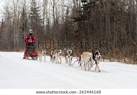 FINLAND MN - JANUARY 25: Kayla Borntrager's team races along the trail during the Mid-distance portion of the John Beargrease Sled Dog Race. Borntrager scratched on January 25, 2015 in Finland, MN. - stock photo