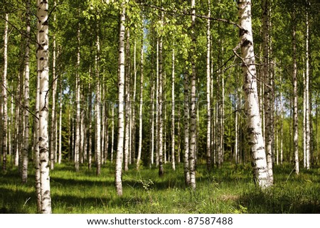 Finnish old-growth forest in the summer