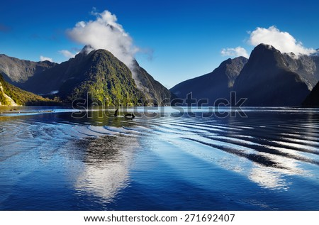 Fiord Milford Sound, South Island, New Zealand