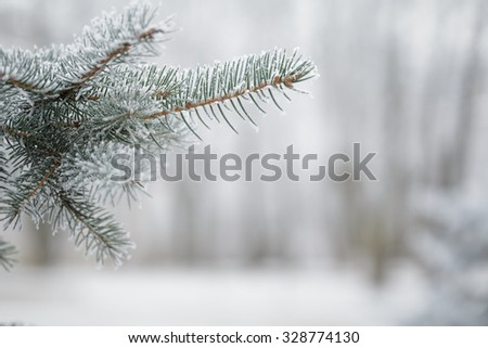 fir branch covered with snow frost, copy space - stock photo