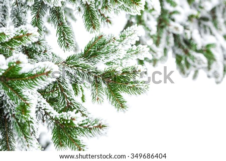 Fir branch in snow isolated on the white background - stock photo
