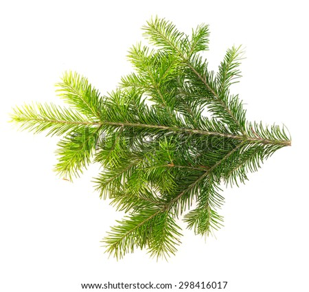 Fir branch isolated on white background for your design