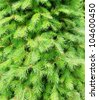 fir branches - stock photo