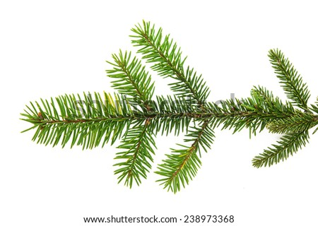 Fir branches isolated on white background