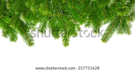 fir branches isolated on white background - stock photo