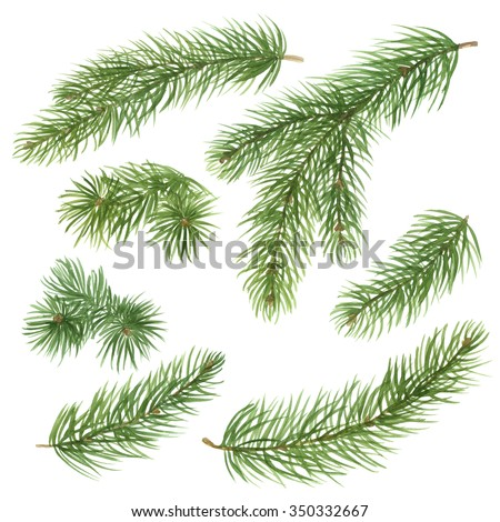 Fir branches set. Hand drawn watercolor illustration  isolated on white background