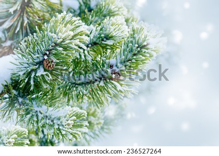 Fir branches with cones. Winter background - stock photo