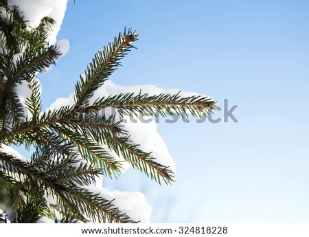 Fir brunches in snow on the sunny winter day at sky background - stock photo
