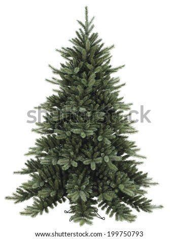 Fir Christmas tree on white background