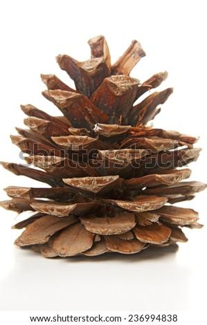 Fir cone closeup - stock photo