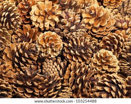 Fir cones taken closeup suitable as background. - stock photo