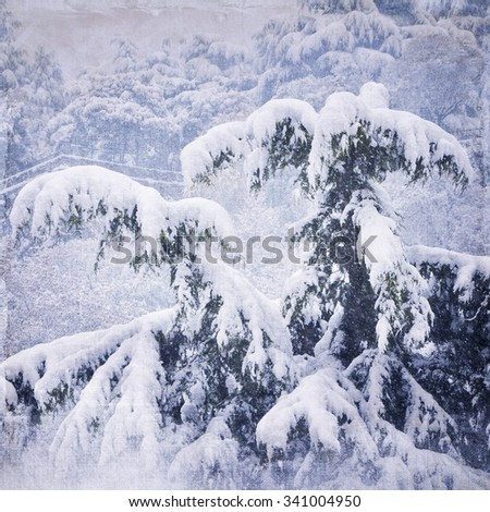 Fir covered with snow at evening - stock photo
