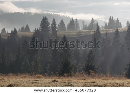 Fir forest on the slopes of the mountains. Autumn Landscape with haze. The light of the morning sun. Karpaty, Ukraine, Europe. Art processing of photos. Color toning and low contrast - stock photo