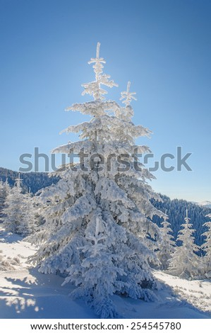 Fir tree and snow on blu sky background - stock photo