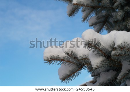 Fir-tree branch covered with snow - stock photo