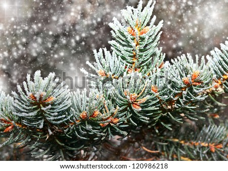 fir-tree branch in snow for new year - stock photo