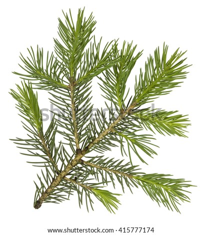 Fir tree branch isolated on white. Clipping Path included for your design.