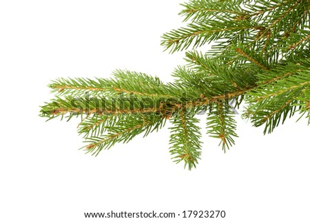 Fir tree branch on a white background. Close up. Christmas decoration. - stock photo