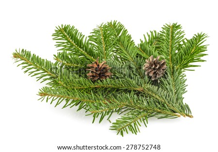 Fir tree branch on white - stock photo