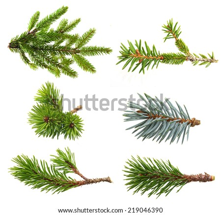 Fir tree branch set  isolated on white. - stock photo