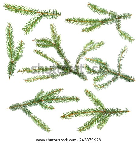Fir tree branch set isolated on white - stock photo
