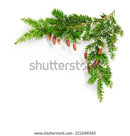 Fir tree branch with cones. Christmas themes. Coniferous yew twig on white background - stock photo
