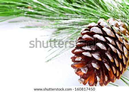 fir tree branch with pinecone on white background - stock photo