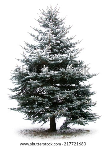 fir tree branches christmas decoration on white - stock photo