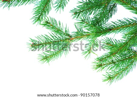 fir tree branches christmas decoration on white