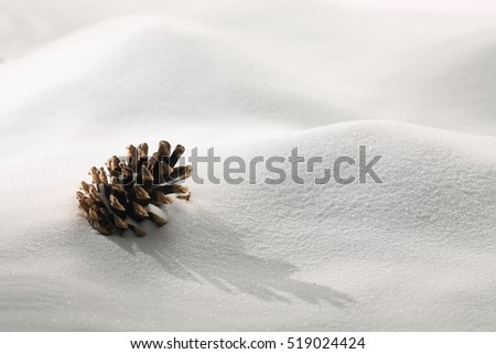 Fir tree cone on White snow background