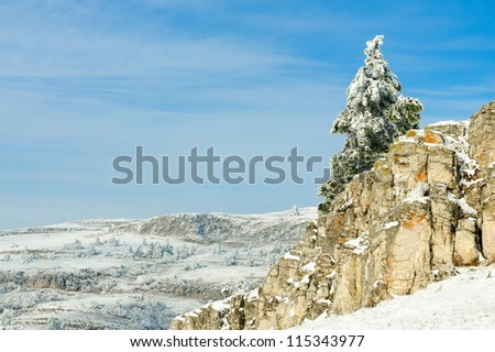 Fir tree covered with snow on a winter mountain