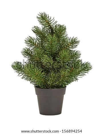 fir-tree in a black pot - stock photo
