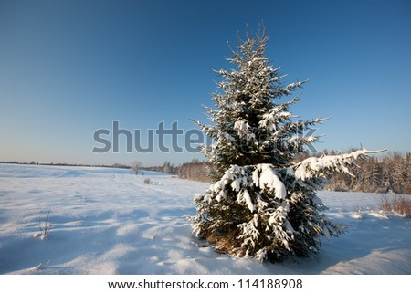 Fir tree in snowy beautiful winter scene, Baltic states, Europe - stock photo