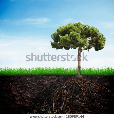 Fir tree in the soil on spring grass and sky background