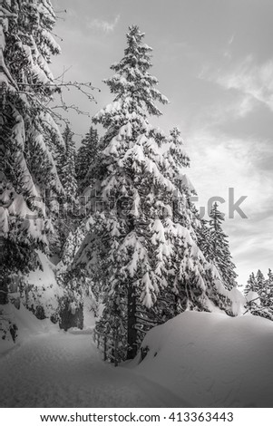 Fir Tree In Winter With Lots Of Snow And Hiking Path And Sunny, Cloudy Sky