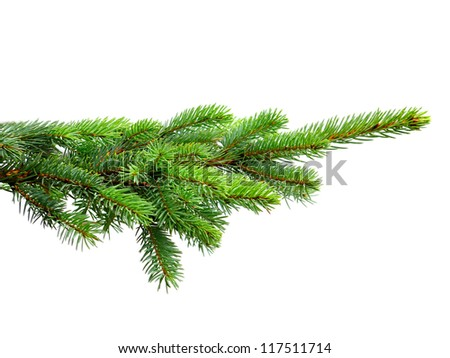 fir tree isolated on white - stock photo