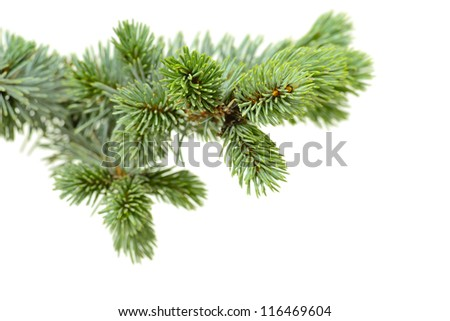 fir-tree on the white background - stock photo