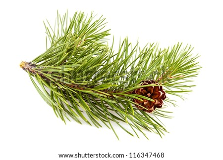 Fir-tree twig with pinecone - stock photo
