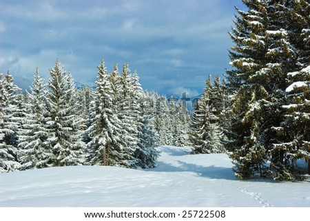 Fir trees covered with snow on a winter mountain at French Alps - stock photo
