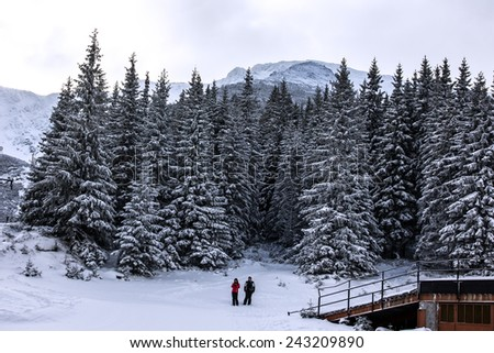 Fir-trees forest and tourists in winter resort Jasna, Tatras, Slovakia.