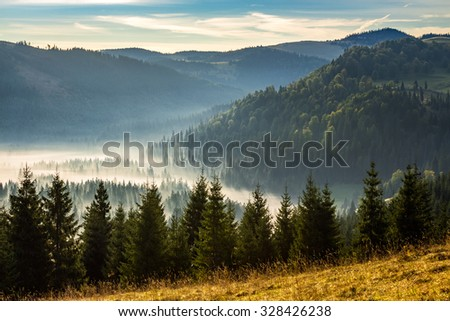 fir trees on a meadow down the hill  to coniferous forest in foggy mountains of Romania in morning light - stock photo