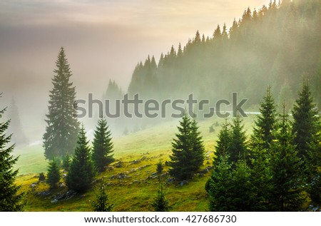 fir trees on meadow between hillsides with conifer forest in fog under the blue sky before sunrise - stock photo