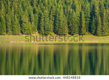 Fir trees reflecting in calm lake water in Durmitor national park in Montenegro with soft focus - stock photo