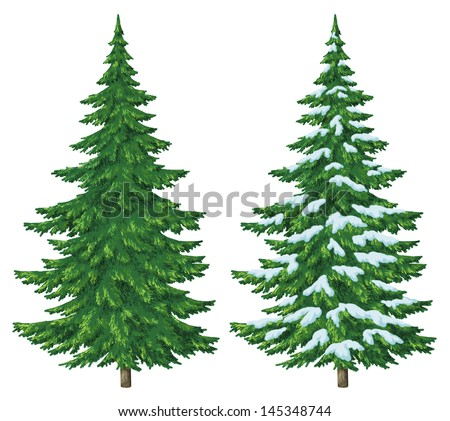 Fir trees, summer and winter with snow, Christmas decoration, isolated on white background - stock photo