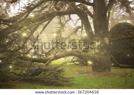 Fir trees with fog and stars - stock photo