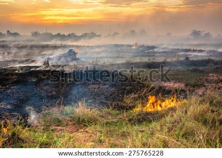 Fire and smoke in the field cause by human to prepare soil for coming cultivation