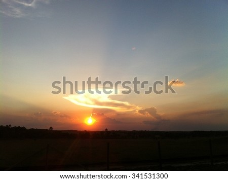 Fire-bird in the sky - stock photo