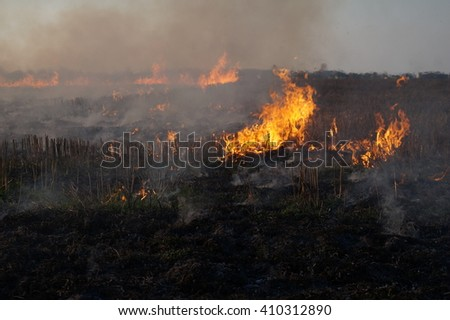 Fire burns stubble on the field destroy summer