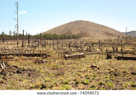 fire damage after a wild fire in the Coconino National Forest - stock photo