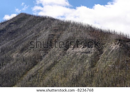 Fire damage - burnt forest in Kootenay National Park of Canada - stock photo